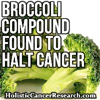 Compound in Broccoli Found to Suppress Tumor Growth, Halt Cancer in its Tracks
